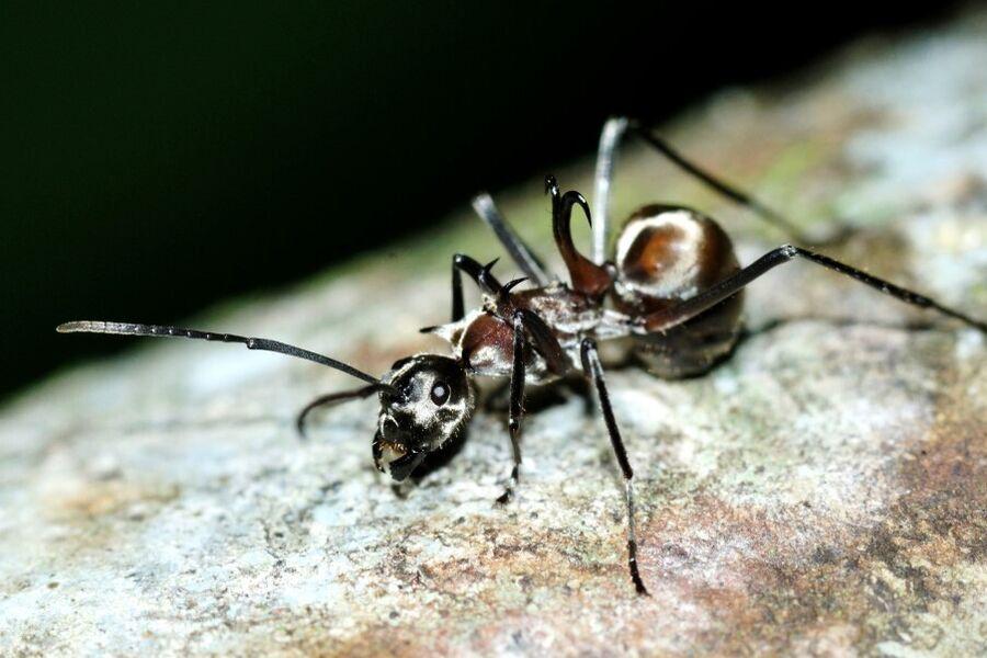 Vi inspirerer: Myrer er forårstegnet hjemme i Lenes bryggers